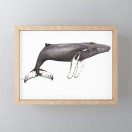 Humpback whale Megaptera Framed Mini Art Print
