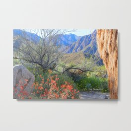 Desert Rose Metal Print