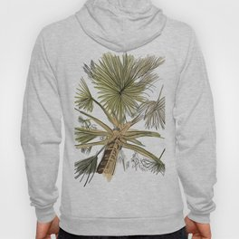 Palm Tree Beach Hoody