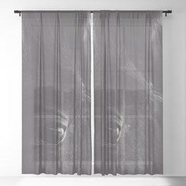 Original wild horses photo, nature landscape, animal lovers, love, black & white photography, horse Sheer Curtain