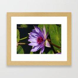 Purple Beauty Framed Art Print