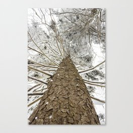 Snowy trees from bellow Canvas Print