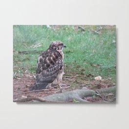 Feathered Foe Metal Print
