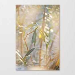 Oleander Glow © Vicki Ferrari Canvas Print