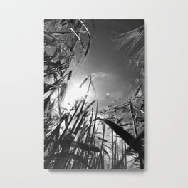 In the grain Black white Metal Print