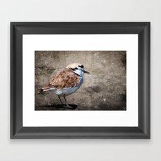 Western Snowy Plover Framed Art Print