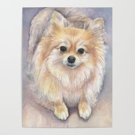 Pomeranian Watercolor Pom Puppy Dog Painting Poster
