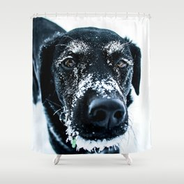 Snow Dog // Cross Country Skiing Black and White Animal Photography Winter Puppy Ice Fur Shower Curtain