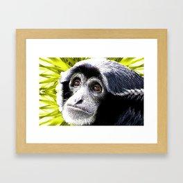 Colobus Framed Art Print