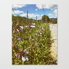 Roadside Flowers • Appalachian Trail Canvas Print