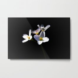 Cardamine Pratensis Flowers Metal Print