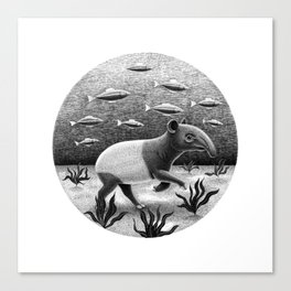 Tapirs can walk underwater | Black and White Illustration Canvas Print
