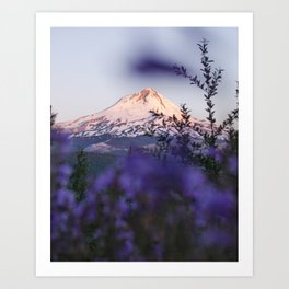 Mt Hood Wildflowers Art Print