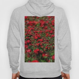 Red roses bunches grow in park Hoody