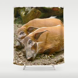 Red River Hogs taking a nap Shower Curtain