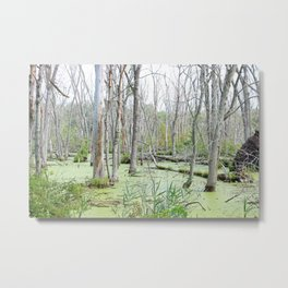 Swamp Water and Dead Trees Metal Print