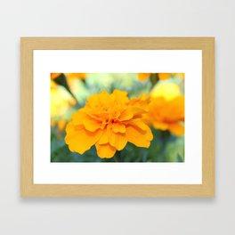 Sunny Delight Framed Art Print