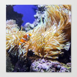 Find a fishy friend Canvas Print