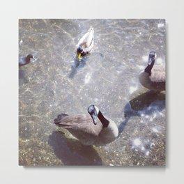 Lake Merritt Geese Metal Print