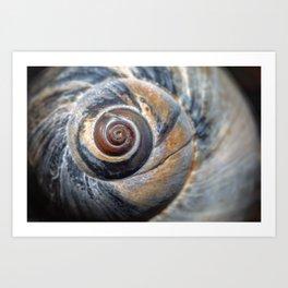 Blue and Gold spiral seashell Art Print