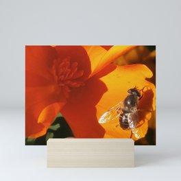 Golden California Poppy With Bee Mini Art Print