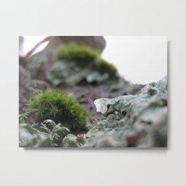Moss And Lichen II Metal Print