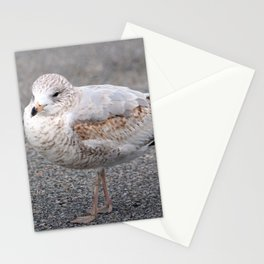 Ring Billed Gull Stationery Cards