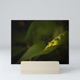 Tiny Creatures Atala Butterfly  Mini Art Print