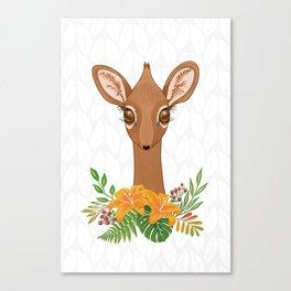 Dik - Dik Baby Antelope Canvas Print
