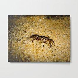 Little Crab Metal Print