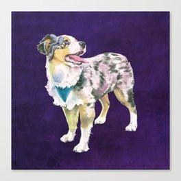 Toy Australian Shepherd Canvas Print
