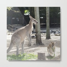 Kangaroo and Wallaby Metal Print