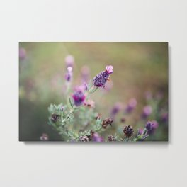 Lavender Life Metal Print
