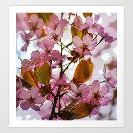 Hanami sakura Art Print