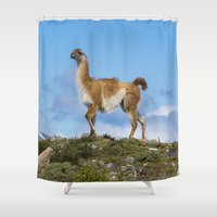 chile Shower Curtains featuring A Guanoco, in Patagonia, Chile. by davehare