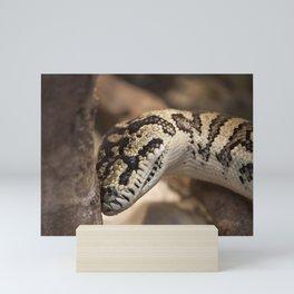 Smiling Python Mini Art Print