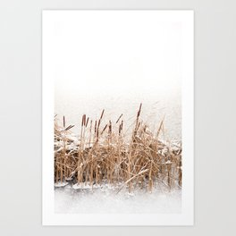 Snow on Typha reeds and frozen water Art Print