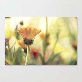 Yellow Summer Wildflower Canvas Print
