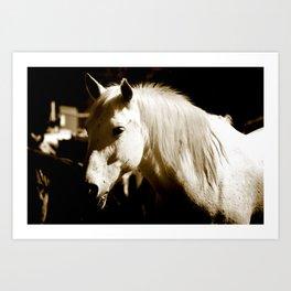 White Horse-Sepia Art Print