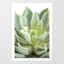 Succulent V Art Print