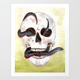 Red-Belly Black Snake Skull Art Print