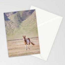 Icelandic Paint Horse Photograph Stationery Cards