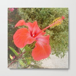 Beautiful Red Hibiscus Flower With Garden Background Metal Print