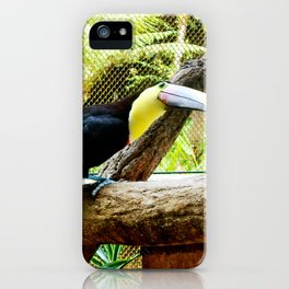 Curious Toucan iPhone Case