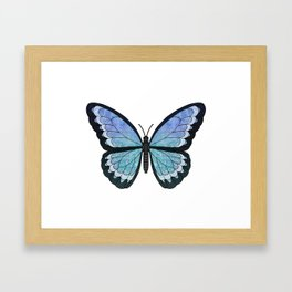 aquamarine Hera (Heros agmarine) fantasy butterfly Framed Art Print