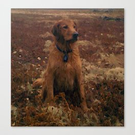 Golden Retriever Day in The Field - Louie Canvas Print