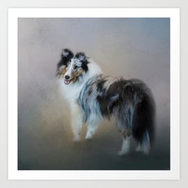 Did You Call Me - Blue Merle Shetland Sheepdog Art Print