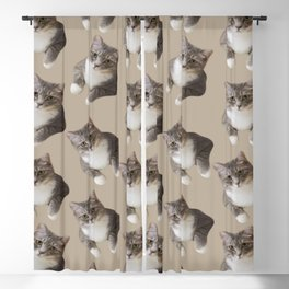 beige tan grey american wirehair cat pattern Blackout Curtain