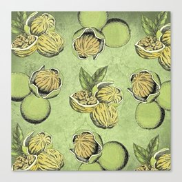 Walnuts Faded Lime Color Canvas Print