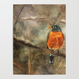 American Robin In The Snow Poster